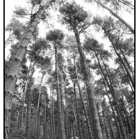 dalby_forest_1