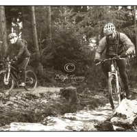 dalby_forest_2