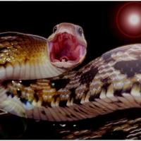 taiwan_beauty_snake_1