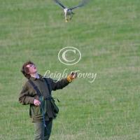 falcon_2004_1