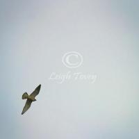 falcon_2004_10