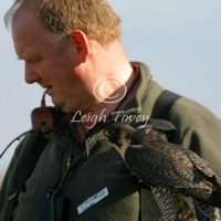 falcon_2004_14