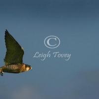 falcon_2004_19