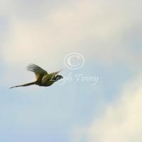 falcon_2004_6