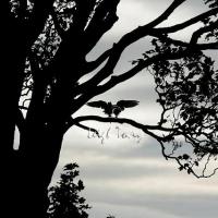 falcon_day_-_2005_14