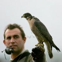 falcon_day_-_2005_3