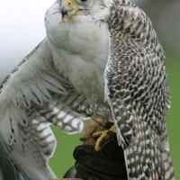falcon_day_-_2005_7