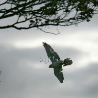 falcon_day_-_2005_8
