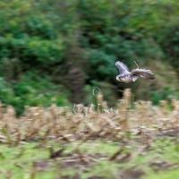 falcon_day_-_2005_9