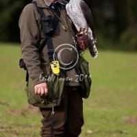 falconer_posing