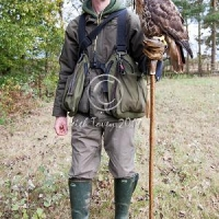 falconer_with_redtail_hawk_-_2